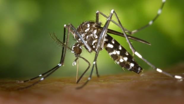 Sus oferece teste rápido para exame de dengue e chikungunya