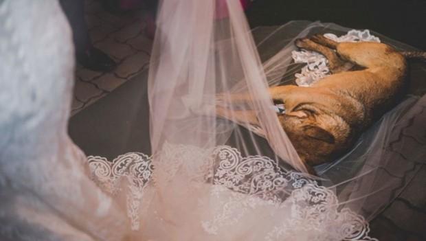 Vira-lata invade casamento, deita no véu da noiva e imagem bomba na web: 'Foi uma bênção'